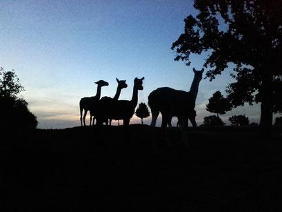In der Abendsonne sehen wir auch schön aus ...