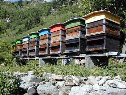 La station de fécondation de Tovassières. Les ruches à mâles.