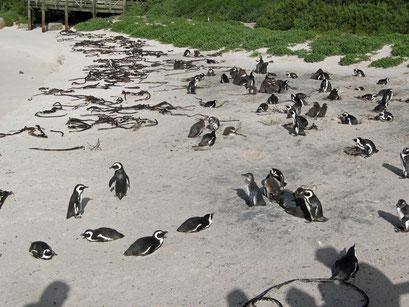 04.06.2014 Bolders Bay Pinguin Station