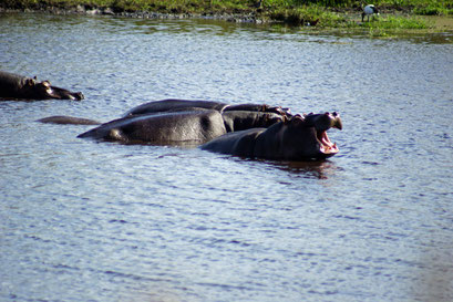 25.05.2014 St. Lucia Wetland Park