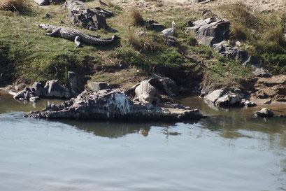 23.05.2014 Krüger Nationalpark