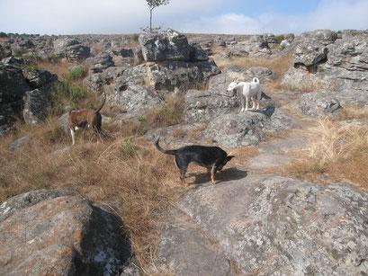19.05.2014 Wanderung auf dem Kaapschehoop Nature Walk
