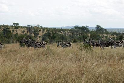 22.05.2014 Krüger Nationalpark