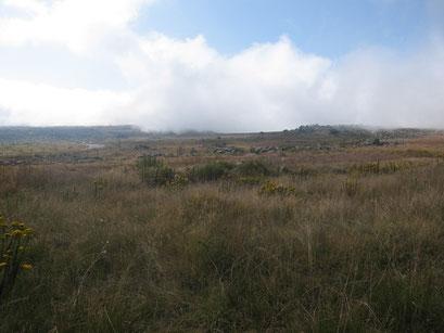 19.05.2014 Nebelschwaden kurz vor Kaapsche Hoop