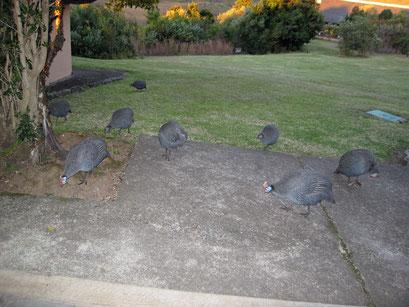 27.05.2014 Unsere Nachbarn oder nicht eingeladene Gäste