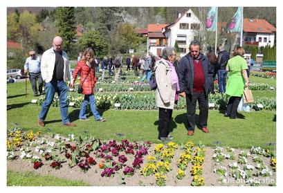 Fetzer Tulpenfeld | Gönningen — Gönningen, Baden-Wurttemberg, Germany.