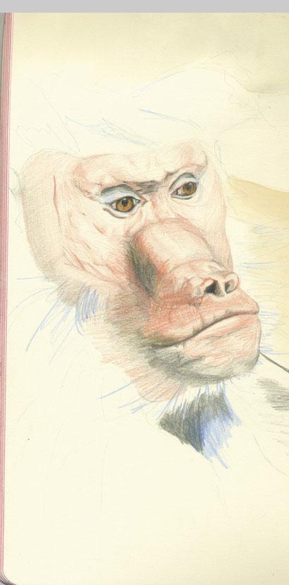 Ausschnitt Tote pflegen, 2013, Farbstift auf Papier