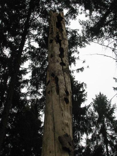 Totholz als Lebensraum