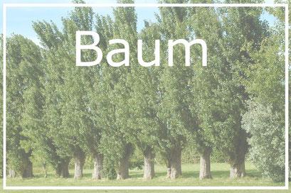 Baum Baumkataster