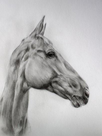 Pferdezeichnung mit Bleistift