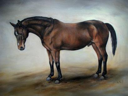 Pferdeportrait, Acryl