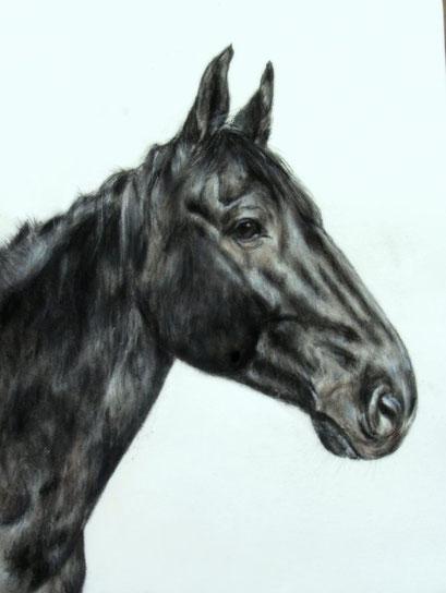 Pferdeportrait mit Pastellkreide gezeichnet