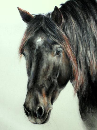 Pferdeportrait Noriker