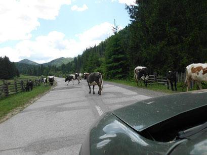 Verkehrsteilnehmer