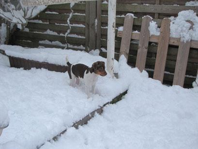 11.02.2017 - Blanca´s erster Schnee