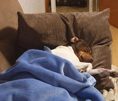 29.01.2020 - 22Uhr Abends!!! Blanca ist schon müde