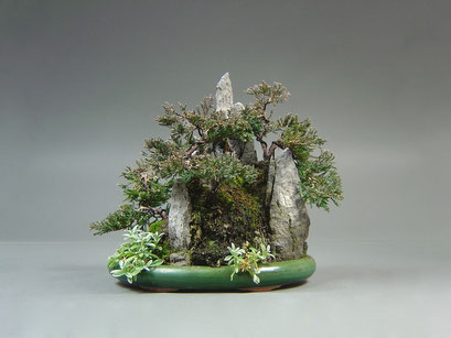 Chinesischer Wacholder, Juniperus chinensis, Felsform Ishizuke, Outdoor - Bonsai, Freilandbonsai