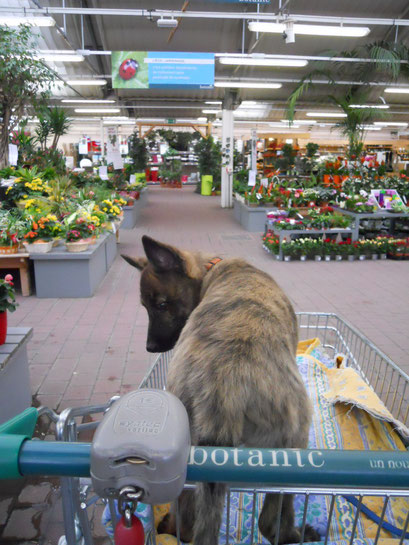 Shoppen in de Botanic..