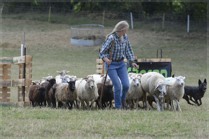 International Herding Trial niveau 1 Zwitserland oktober 2016