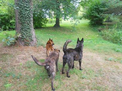 """2 grote """" puppen"""" van vorig jaar Endor en Edo samen met Dido"""