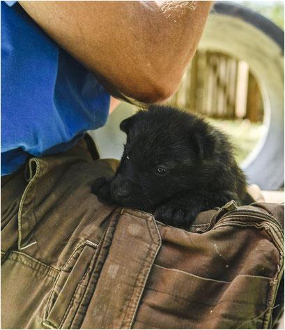 lichtblauw vindt het ook heerlijk om op schoot (of onder je arm of in je vest) een slaapholletje te zoeken.