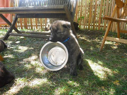 Falco heeft honger