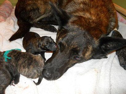 Met zijn allen thuis, moe en  tevreden wel 8 pups.