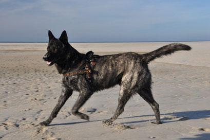 tijdens vakantie op  Texel.. een week lang rennen en dollen op het strand
