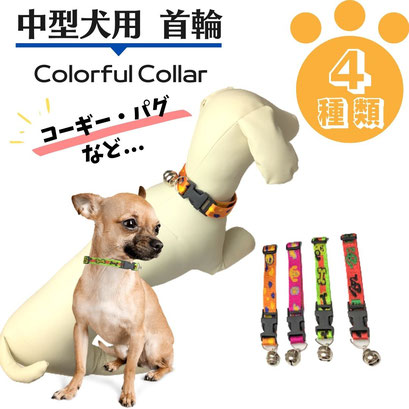 中型犬用/カラフルな首輪(トイプードル・Mダックス など)