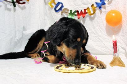 """zum Geburtstag gibt es auch schon einmal einen """"Hundekuchen"""""""