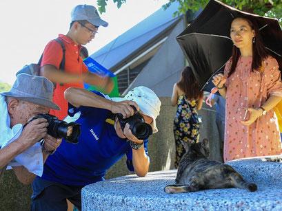 台湾撮影旅行02 日本と変わらない猫だけど、台湾の猫はひと際違う?