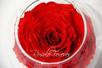 ROSOLO FOREVER: Très grande rose dans un bocal / rouge vif