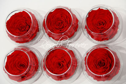 ROSOLO FOREVER: Très grande rose XL dans un bocal / rouge bordeau