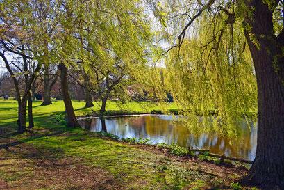 Im Frühling im Alsterpark