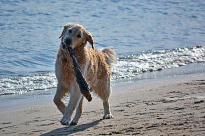 Verspielter Hund am Elbstarnd
