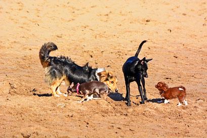 Hundefreuden am Elbstrand Övelgönne