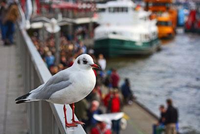Möwe als Hamburger Hafenaufsicht