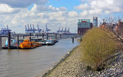 Langsam wird es grün am Altonaer Hafenrand.