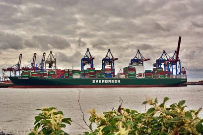 Blick über die Elbe zum TERMINAL BURCHARDKAI