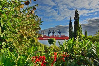 Blick auf das TERMINAL BURCHARDKAI von den Gärten in Övelgönne