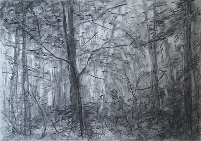 Through The Forest II,Grafit und Kohle,42x59cm