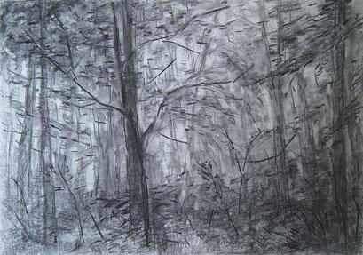 Through The Forest II,Grafit und Kohle,42x59cm