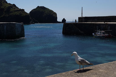 Mullion Cove - Hafen