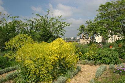 """""""Chemin du bout du monde"""", Jardinet des plantes médicinales. Angers, MAINE-ET-LOIRE (49)  © Annick Maroussy"""