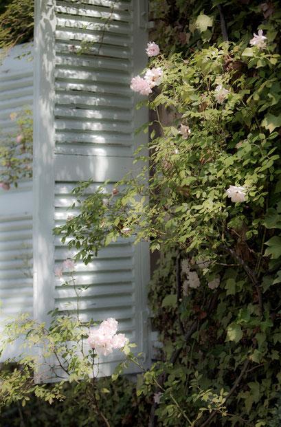 Volets, Jardin de l'Île verte, Châtenay Malabry,  (92 Hauts-de-Seine)