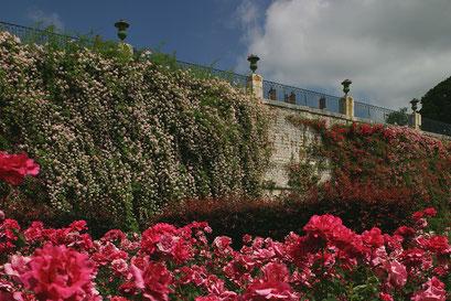 Jardin de Blois, Evêché, LOIR-ET-CHER (41)   © Annick Maroussy