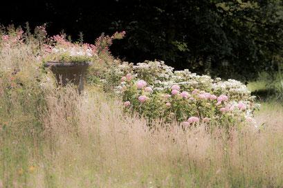 Prairie, Jardin de l'Île verte, Châtenay Malabry, (92 Hauts-de-Seine)
