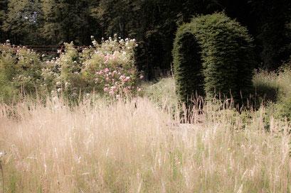 Jardin de l'Île verte, Châtenay Malabry, (92 Hauts-de-Seine)