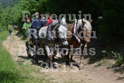 Route du Beaujolais 2015 - attelage ne paire - samedi matin