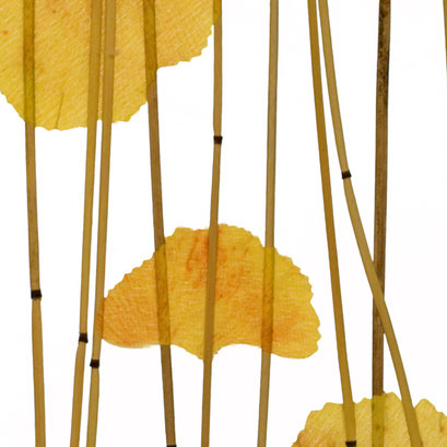 Lumicor - Natural - Ginkgo Reed
